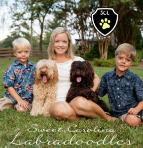 Labradoodle Breed - North Caroline