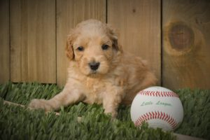 Babe with Baseball