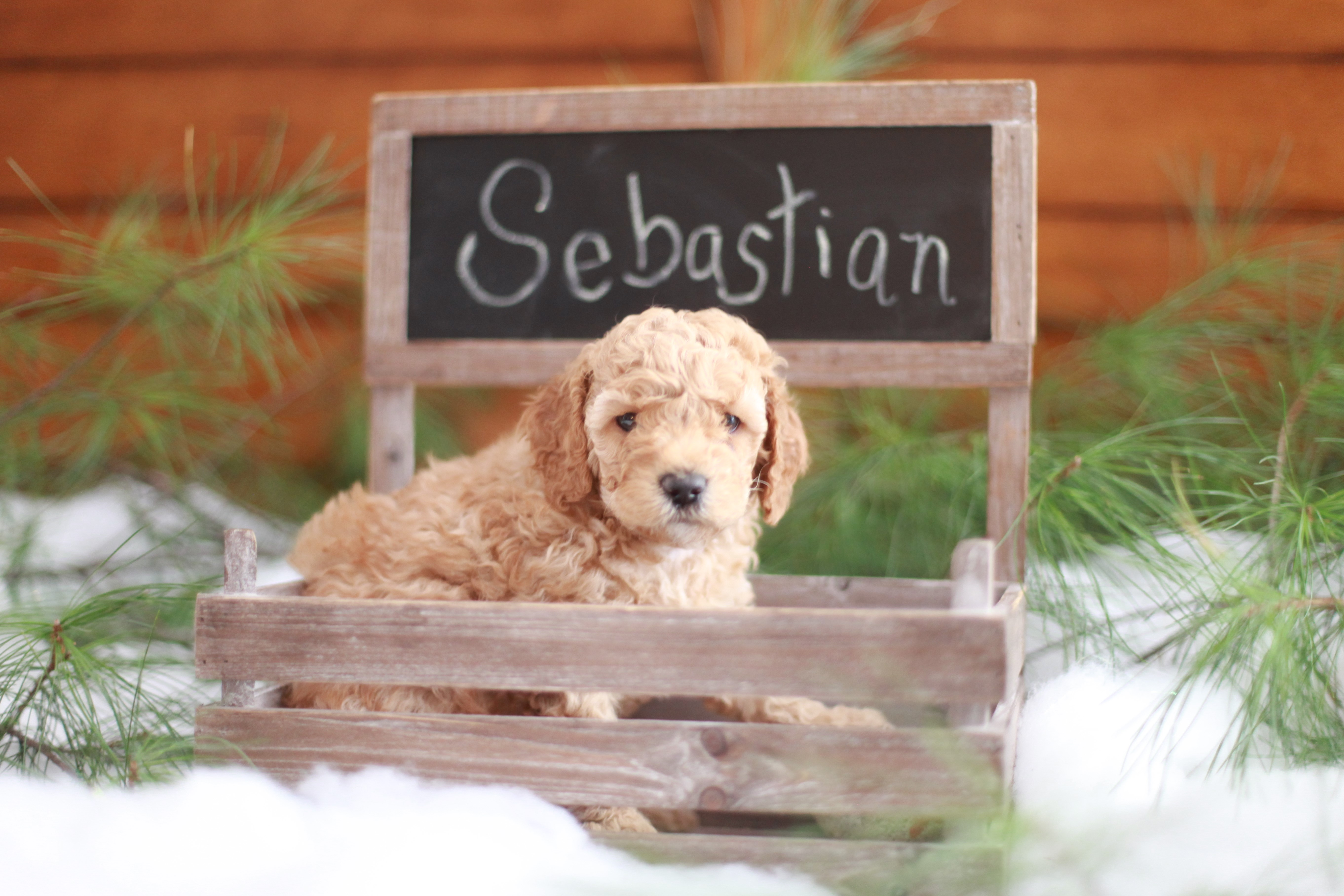 Sebastian in Chalkboard Box