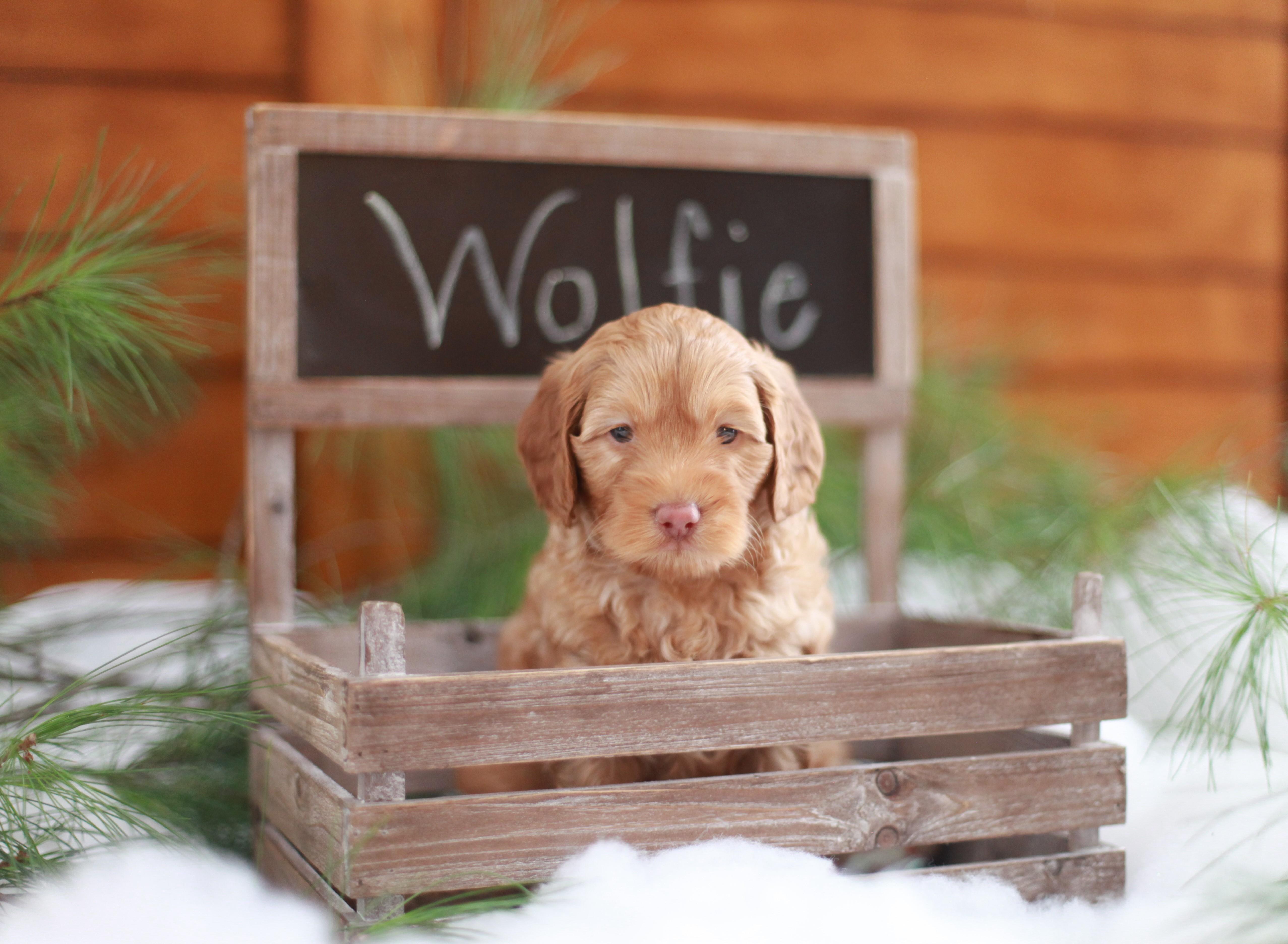 Wolfie Chalkboard Box