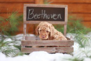 Beethoven in Chalkboard Box