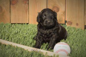 Judge with Baseball