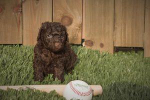 Lou Lou with Baseball