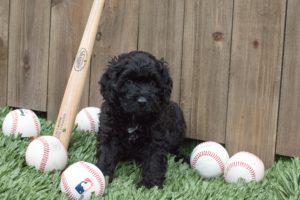 Reggie with baseballs