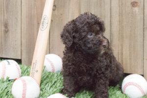 Yogi with baseball