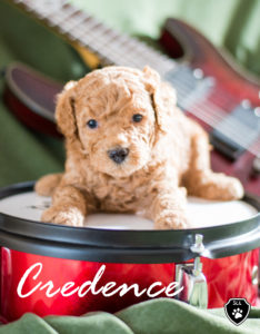 Credence with Drum