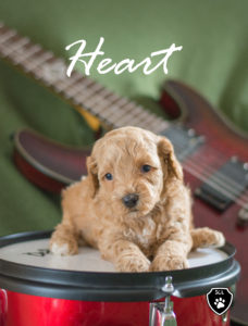 Heart on a Drum
