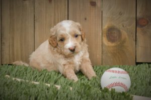 Miss Whitey with Baseball