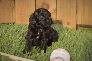 Reggie with Baseball